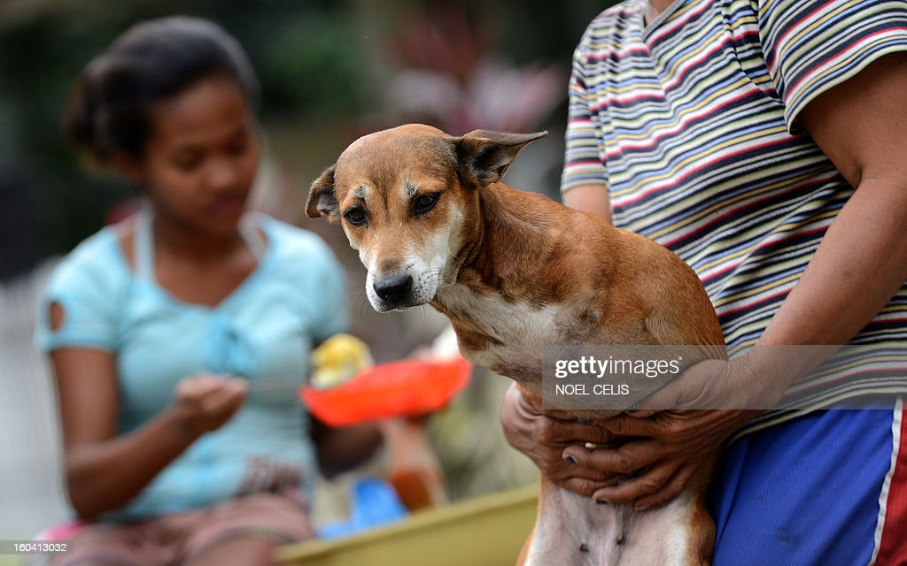 Rita Tulipas (R), 49, a street vendor who earns an average of six dollars a day holds her pet dog 'Bambi', who was born without front legs, in Manila on January 31, 2013. The Philippines said on January 31 its economy grew by a better-than-expected 6.6 percent last year as confidence rose in President Benigno Aquino's efforts to fight corruption and alleviate poverty. AFP PHOTO/NOEL CELIS