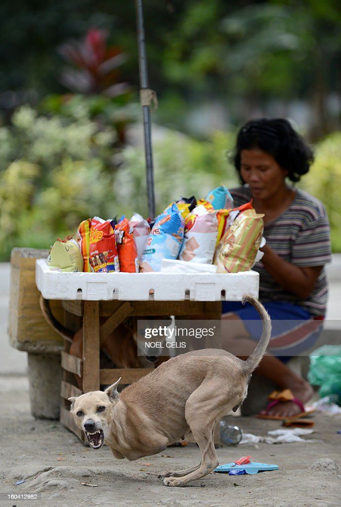 Rita Tulipas (R), 49, a street vendor who earns an average of six dollars waits for customers as her pet dog 'Bambi', who was born without front legs, barks in Manila on January 31, 2013. The Philippines said on January 31 its economy grew by a better-than-expected 6.6 percent last year as confidence rose in President Benigno Aquino's efforts to fight corruption and alleviate poverty.