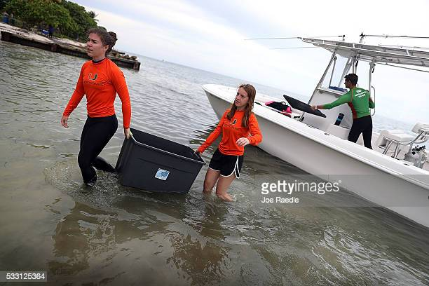 Rivah Winter and Grace Snyder from the University of Miami Rosenstiel School of Marine and Atmospheric Science carry containers with pieces of...