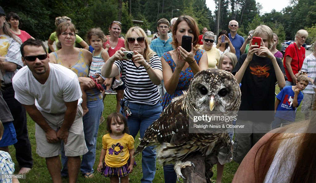 River a Barred Owl is the center of attention at White Deer Park in Garner North Carolina on Friday August 24 2012 River was among three owls rescued...