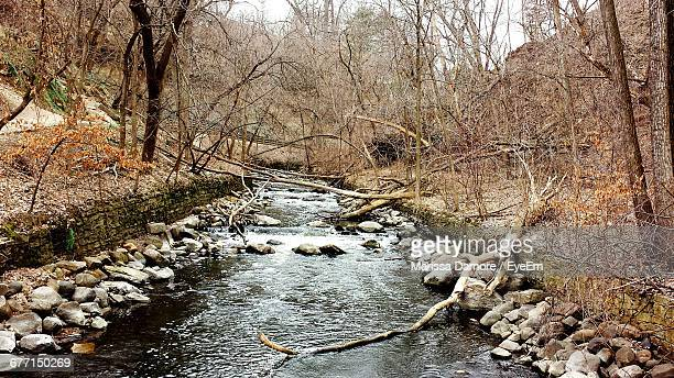River Amidst Bare Trees In Forest