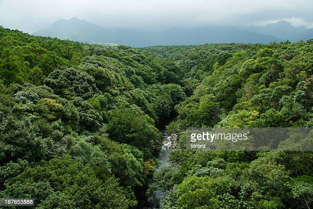 River and rainforest from above, Yakushima