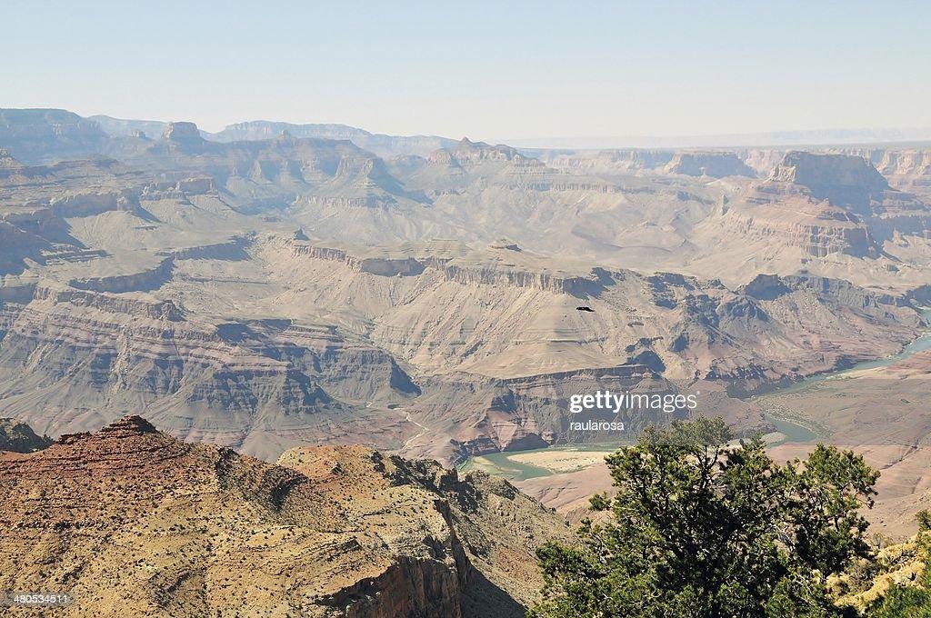 River at Grand Canyon National Park : Stockfoto