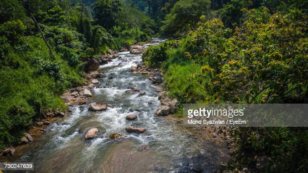 River Flowing Amidst Trees In Forest