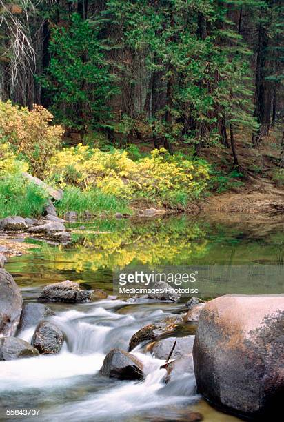River flowing through a forest, Merced River, Yosemite National Park, Mariposa County, California, USA