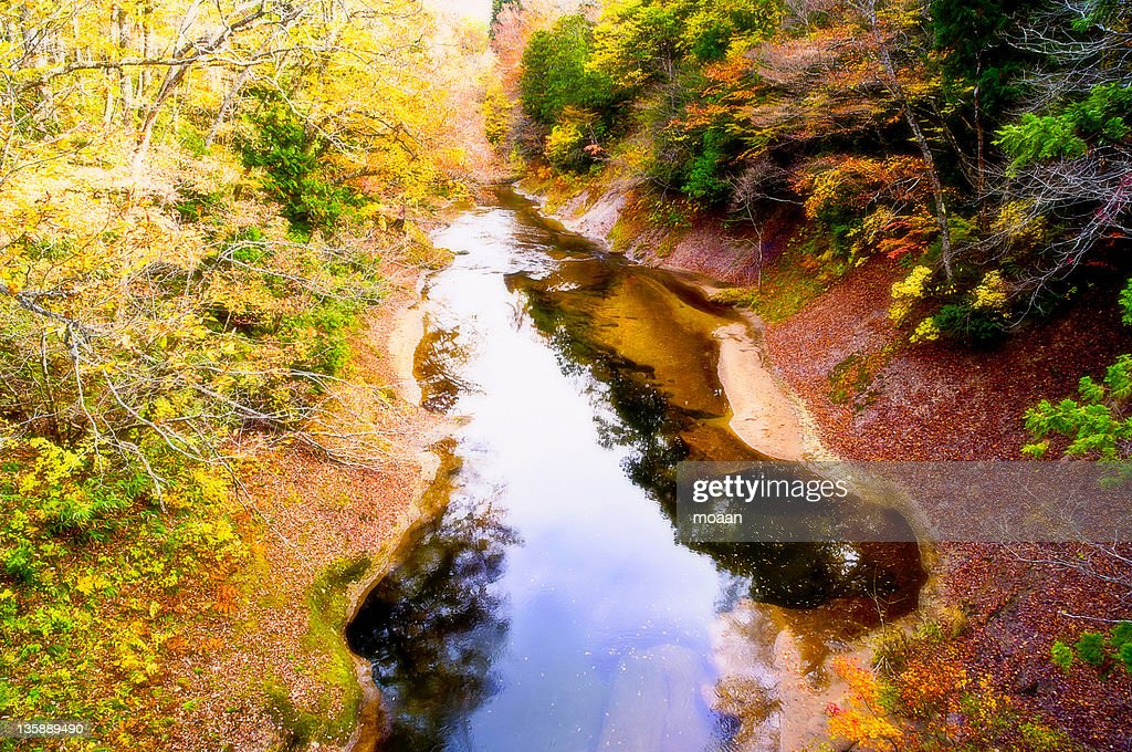 River flowing through forest : Stock Photo