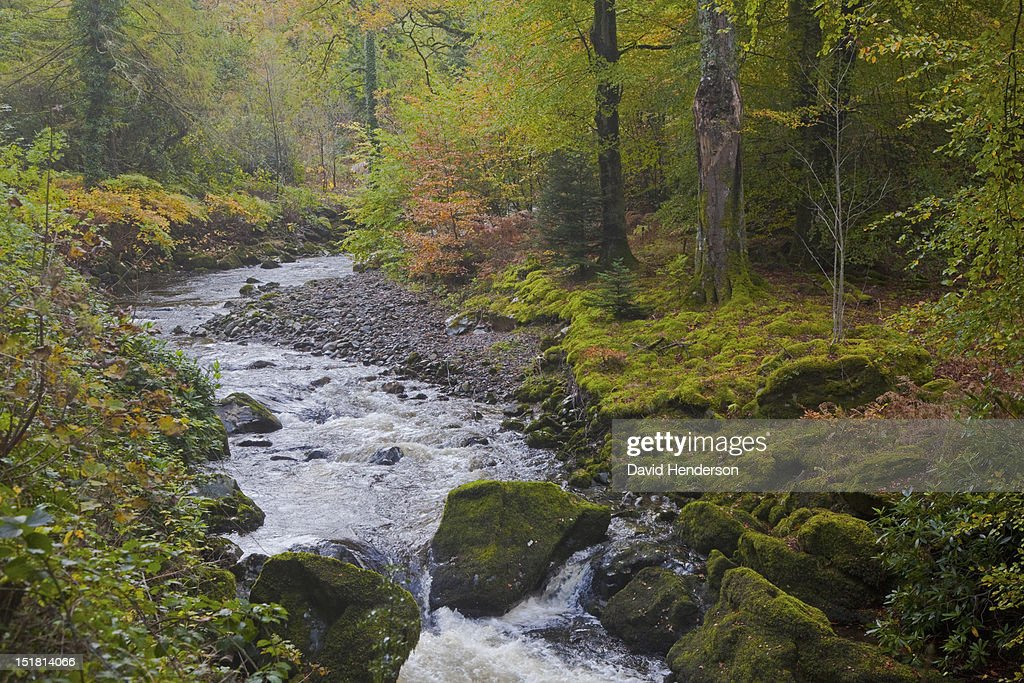 River in autumn woods : Stock Photo