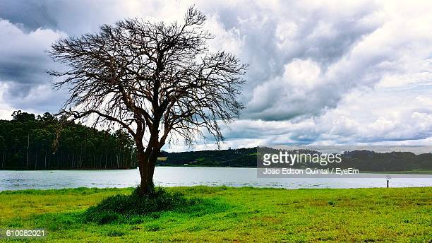 River In Front Of Bare Tree On Grassy Field Against Cloudy Sky