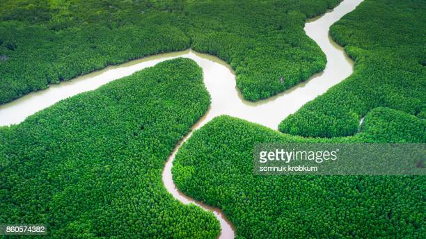 River in green mangrove forest