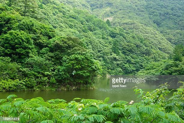 River in lush green forest, Shimane, Japan