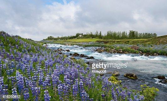 River in Sudurland, Iceland : Foto de stock