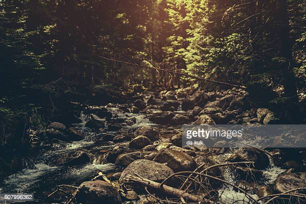 River in the dark forest
