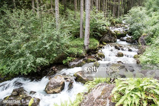 River in the forest : Stock Photo