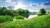 Calm river in the forest in sunny day