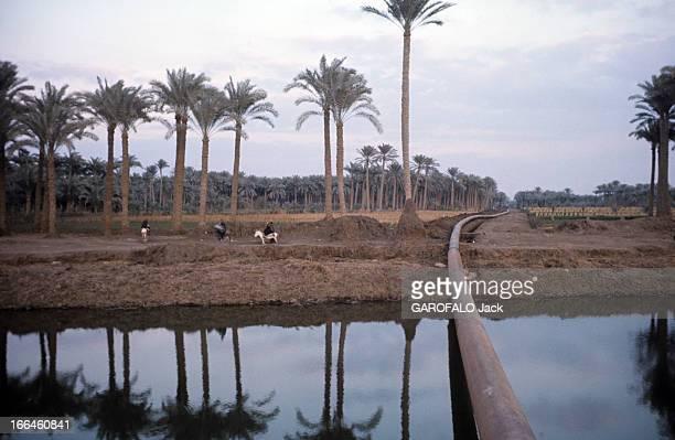 River Nile Egypte juin 1976 Le Nil fleuve d'Afrique une conduite d'eau franchit un oued pour irriguer des cultures délimitées par des palmeraies