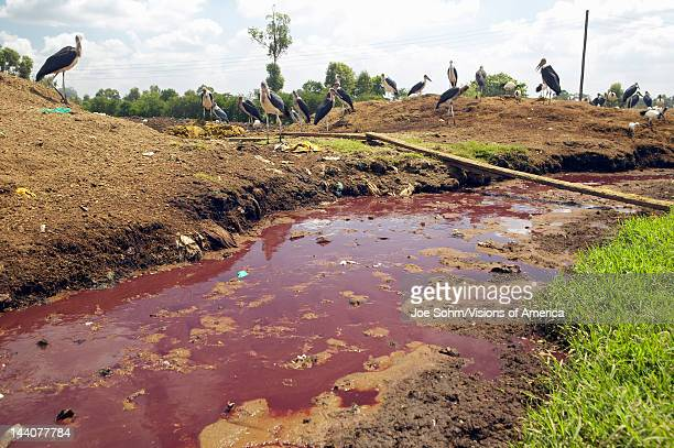 River of blood flows from Nyongara slaughterhouse in Nairobi Kenya Africa