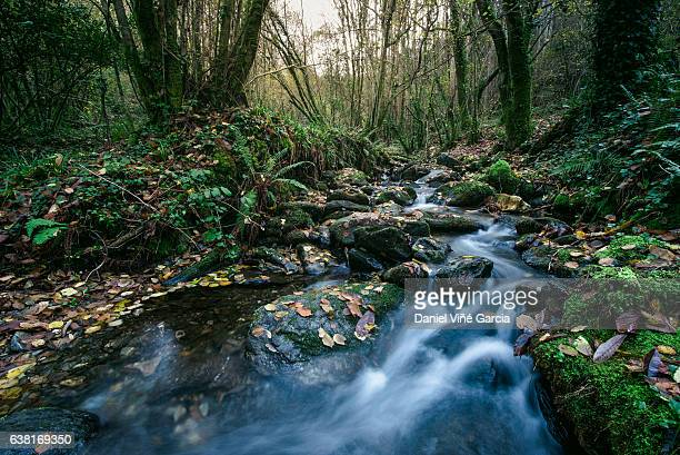 River of mountain crossing a forest in autumn