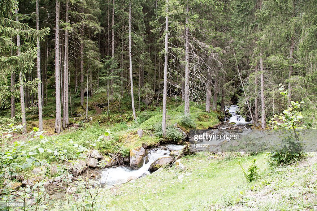River out of the forest : Stock Photo