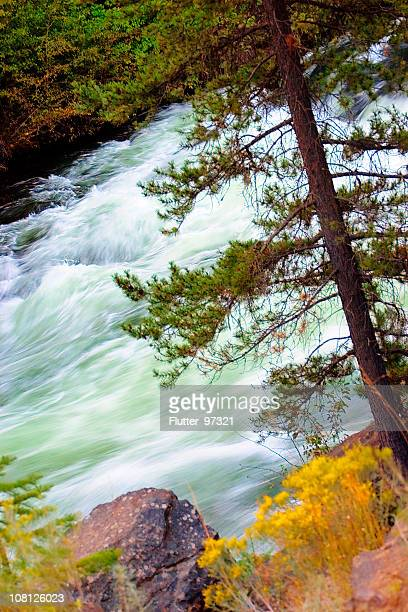 River Rapids in Autumn Forest