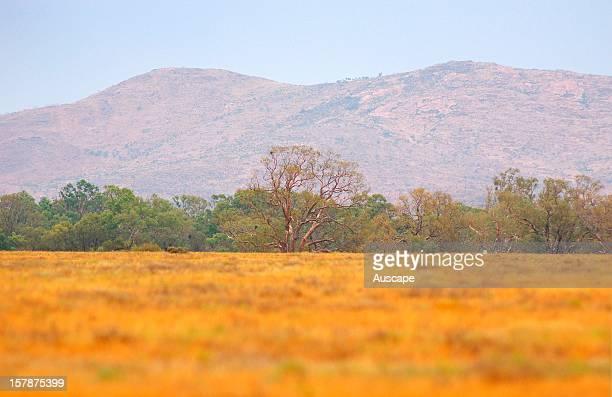 River red gum riparian woodland and open plains Boolcoomatta Bush Heritage Australia Reserve northeastern South Australia