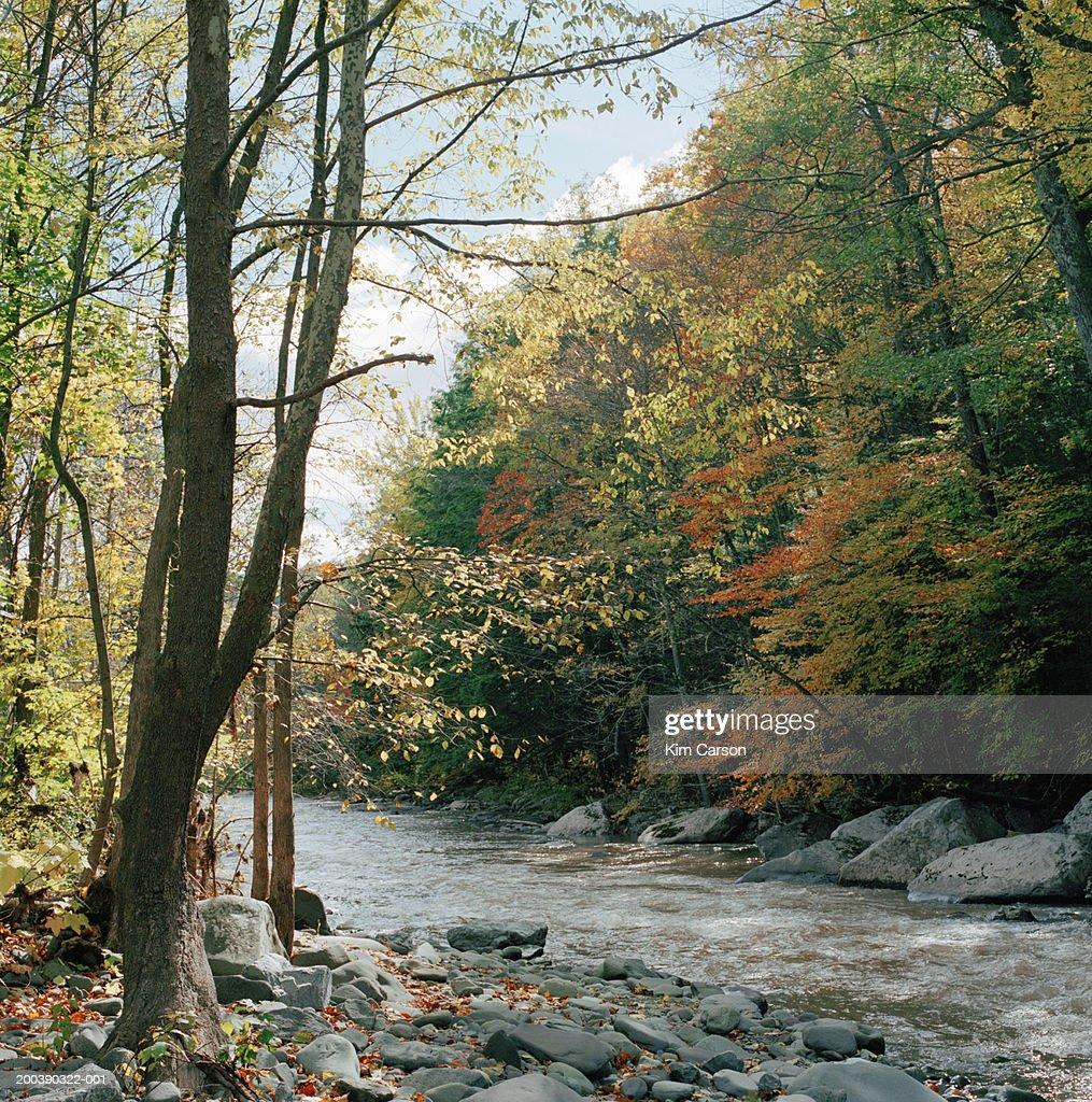 River running through mountain forest, autumn
