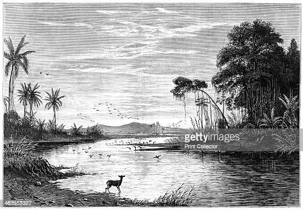 A river scene in Venezuela 1877