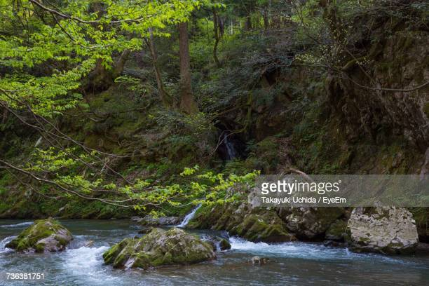River Stream Amidst Trees In Forest