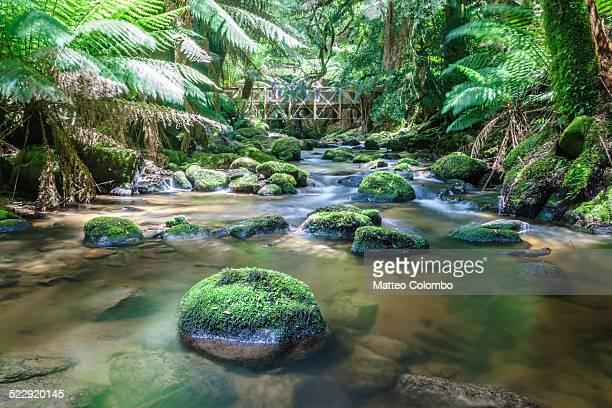 River through green lush rainforest of Tasmania