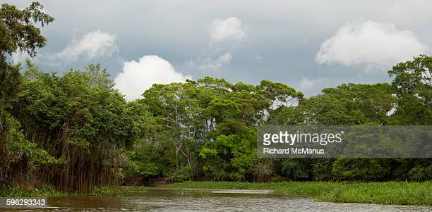 Riverine forest, Pantanal.