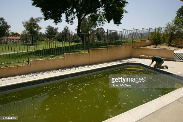 Riverside County Environmental Health Services Specialist Barry Hess looks into water where mosquitoes are breeding by the thousands in a swimming...