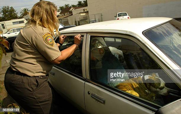 Riverside Nov 07 2004 –––– Animal control officer Cynthia Lee trys to get inside a car to rescue a dog that had been locked inside for the past two...