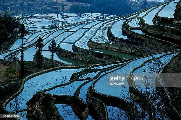 Riziérres Yunnan chine