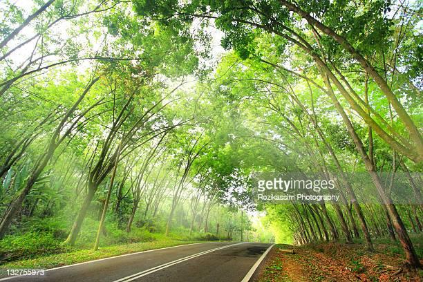 Road along rubber plantation