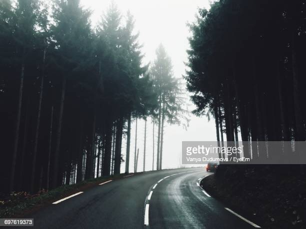 Road Along Trees In Forest