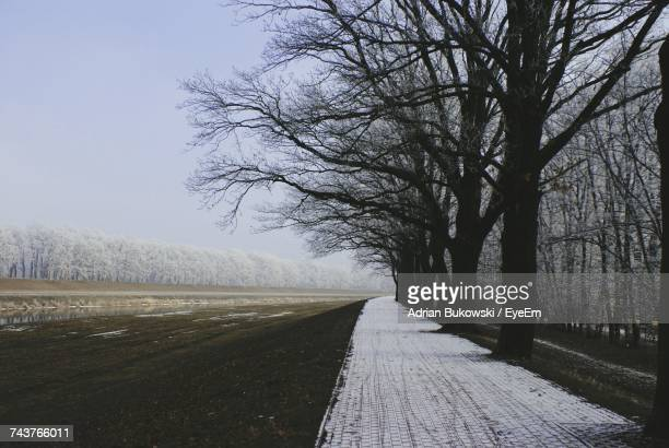 Road Amidst Bare Trees Against Clear Sky During Winter