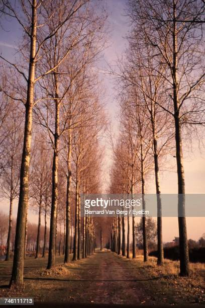 Road Amidst Bare Trees During Autumn