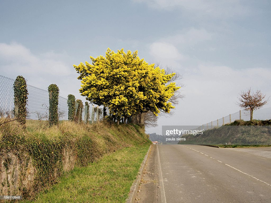 Road and tree : Stock Photo