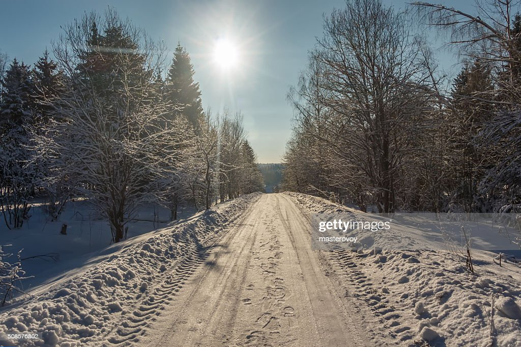 Road and trees covered with snow : Stock Photo