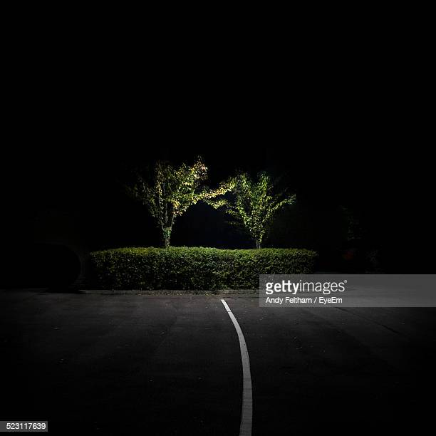 Road And Two Trees Behind Hedge Illuminated At Night