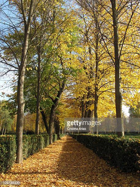 Road covered with leaves in autumn in the Island Garden in Aranjuez Cultural Landscape World Heritage Site Royal Site and Village of Aranjuez Madrid...