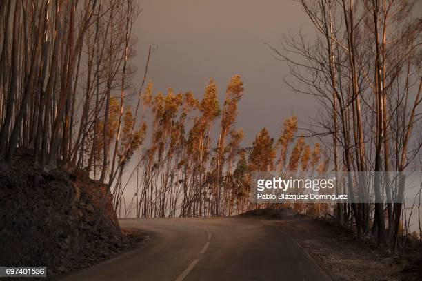 A road crosses a burnt forest after a wildfire took dozens of lives on June 18 2017 near Castanheira de Pera in Leiria district Portugal On Saturday...