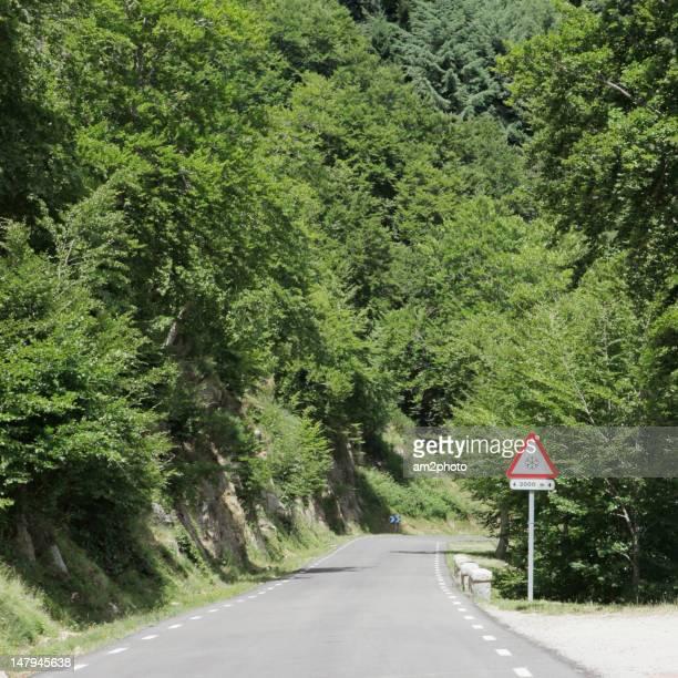 Road entering dense forest