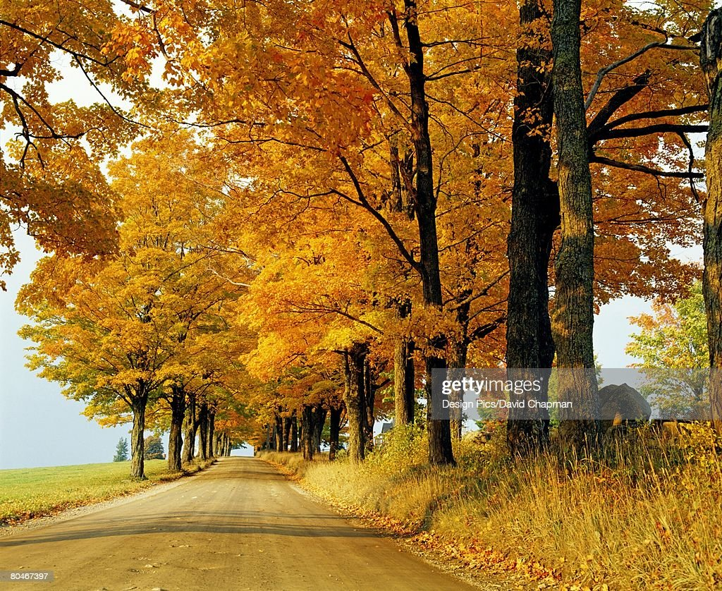 Road in autumn, eastern townships, Quebec, Canada : Stock Photo