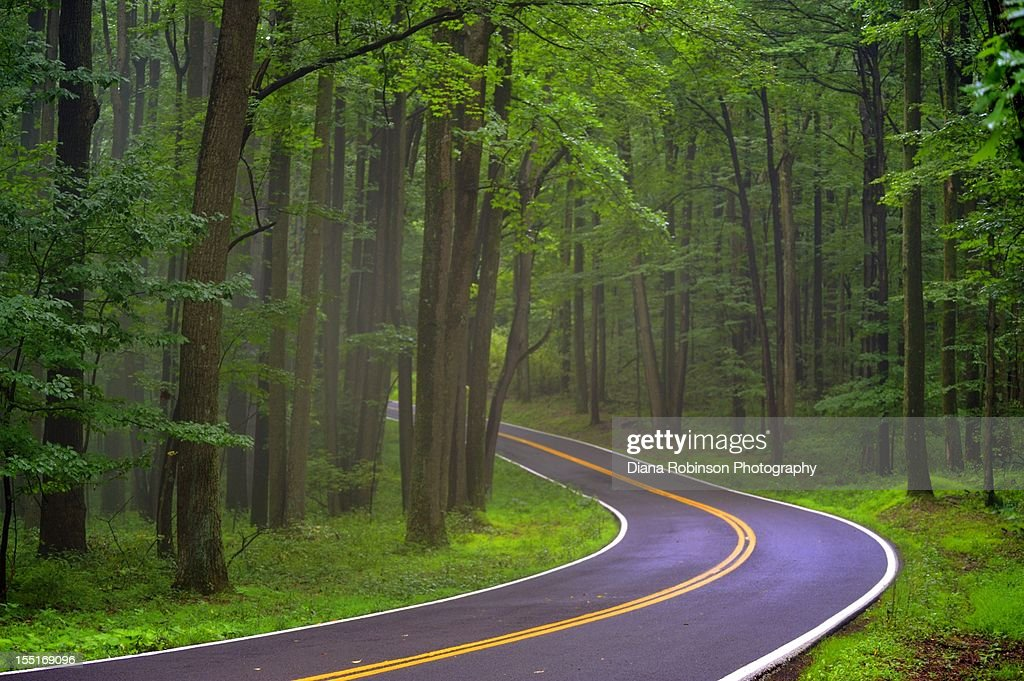 Road in Cooper Rock State Forest : Stock Photo