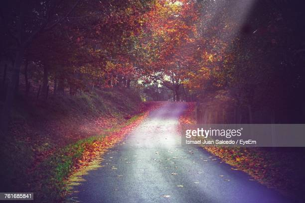 Road In Forest During Autumn