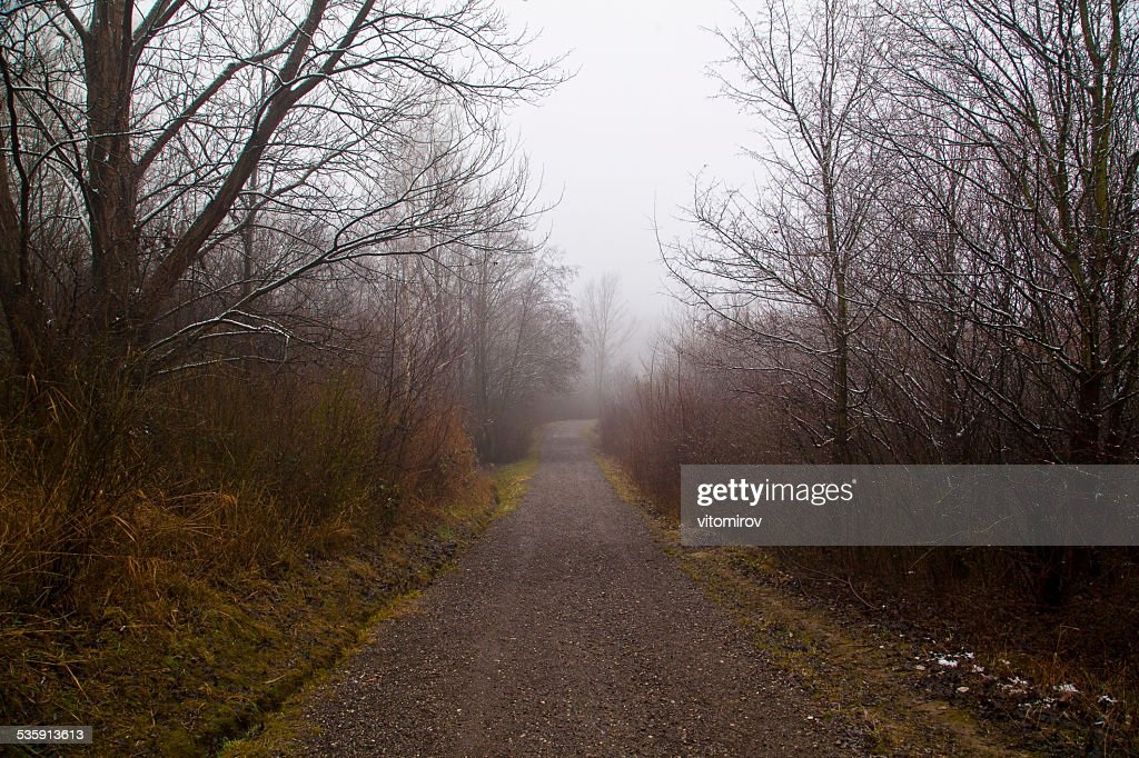 Estrada na floresta : Foto de stock