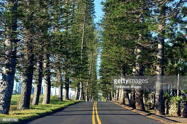Road in Hawaii
