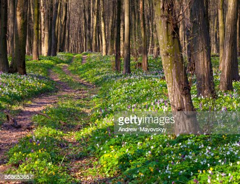Road in spring forest : Stock Photo