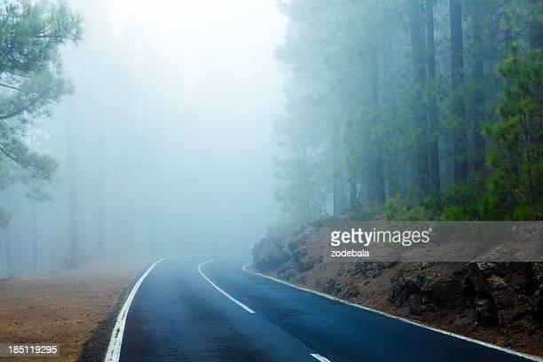 Straße in Wald durch Nebel, El Teide National Park