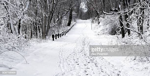 Road in the winter forest after snowfall
